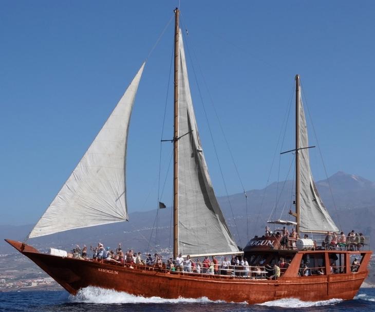 Shogun 5 Hour Sailing